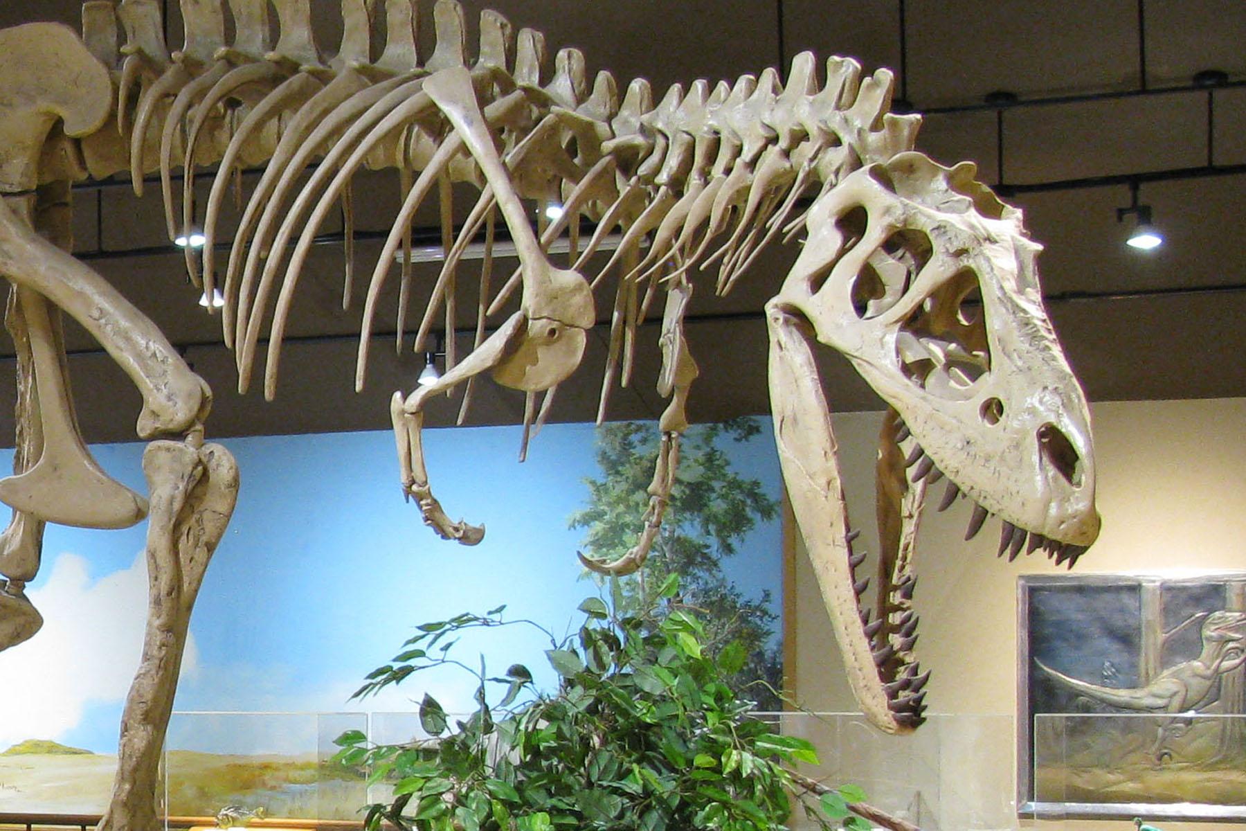 Dickinson Museum Center – Big Bones  Local Stories
